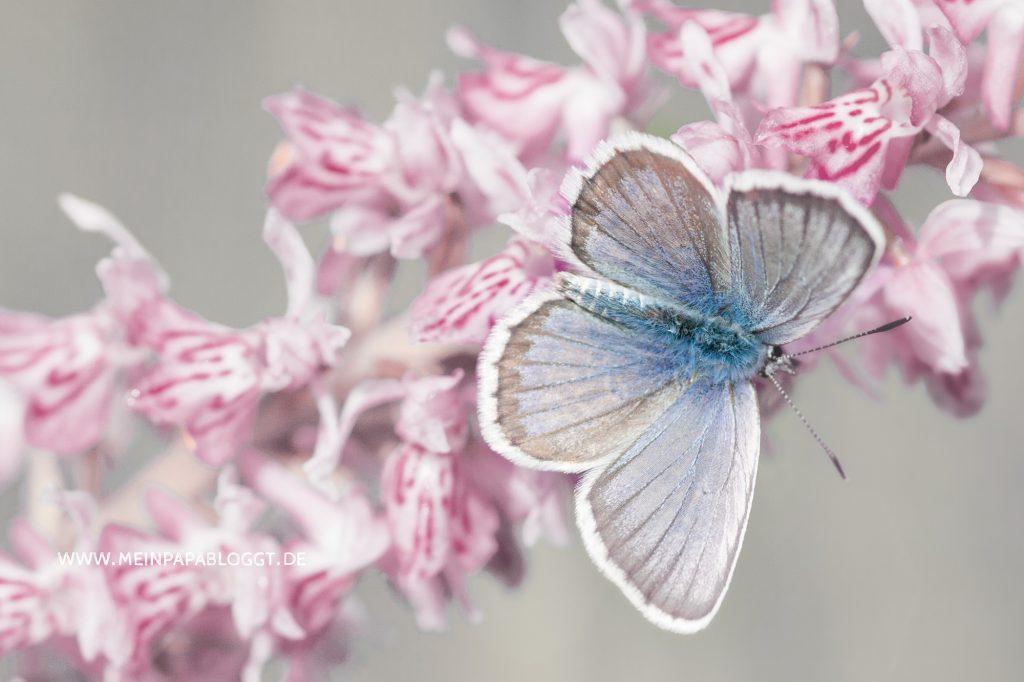 Schmetterling im Bauch
