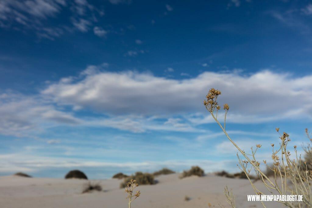 White-Sands6