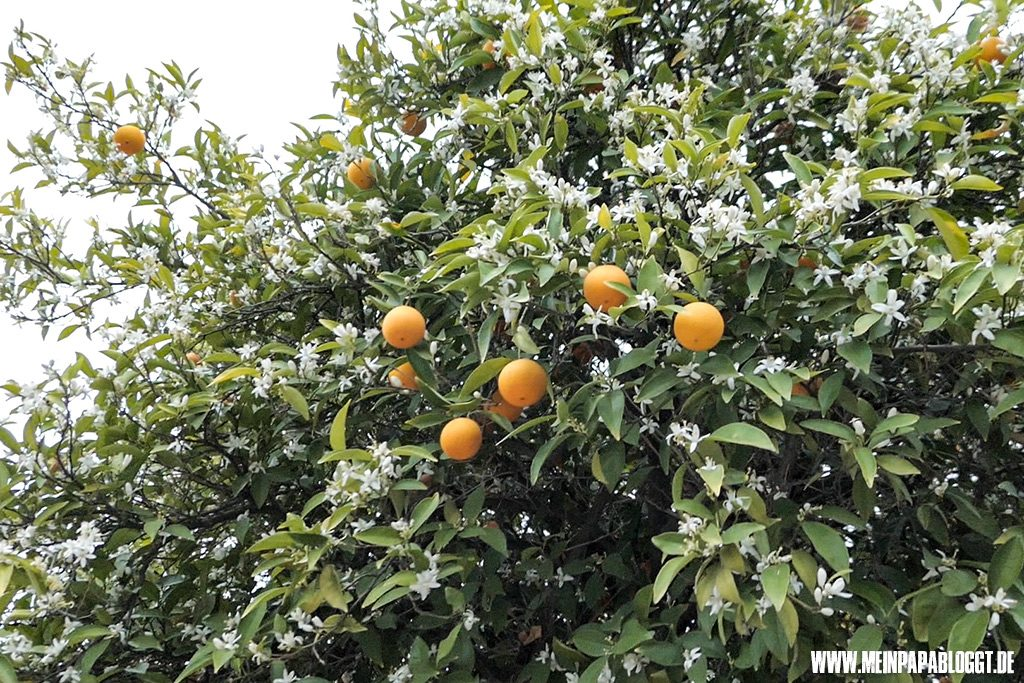 Orange Grove 5